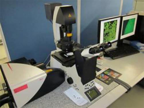 共焦点レーザー顕微鏡